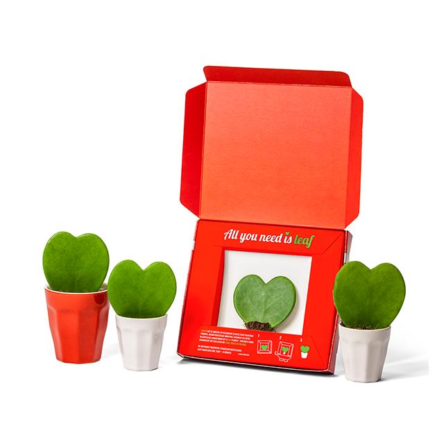 Leafplantje