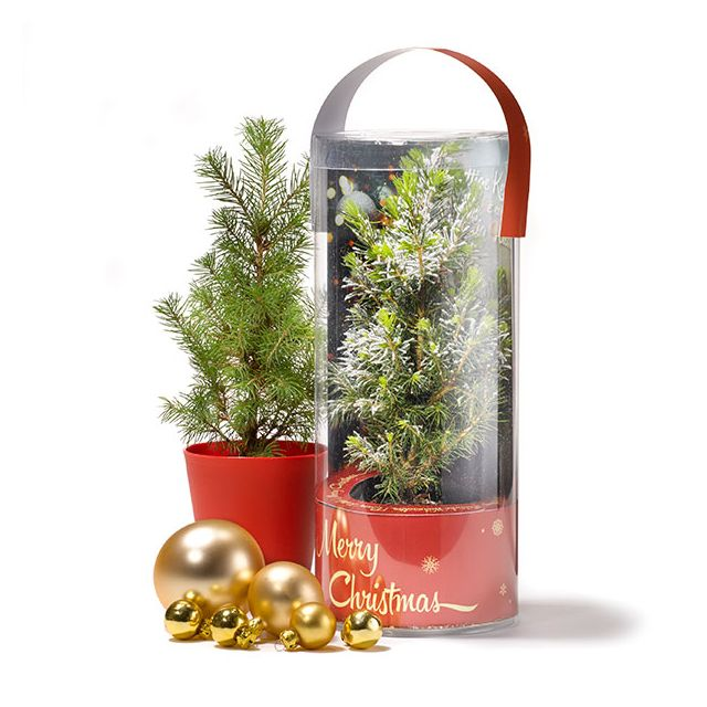 Kerstboom in koker - eigen ontwerp