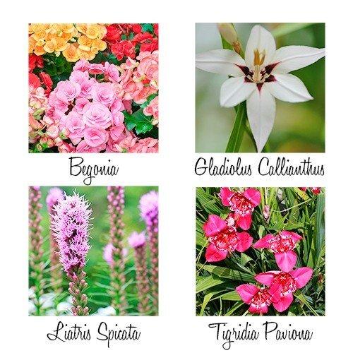 Soorten bloembollen