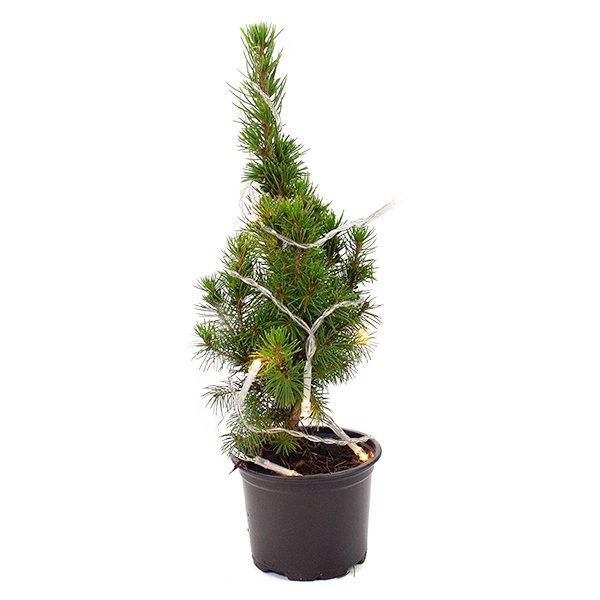 kerstboom met verlichting