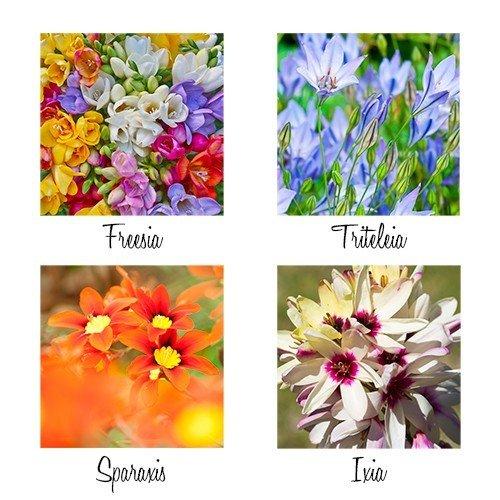 Soorten voorjaarsbloemen