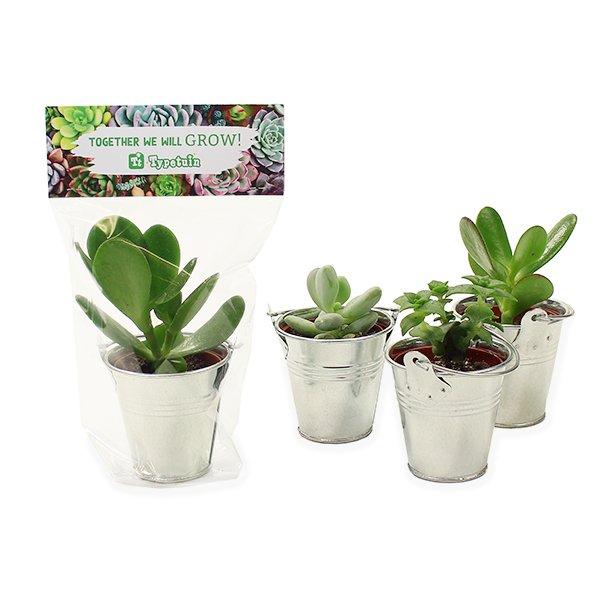 Vetplantjes met topkaartje