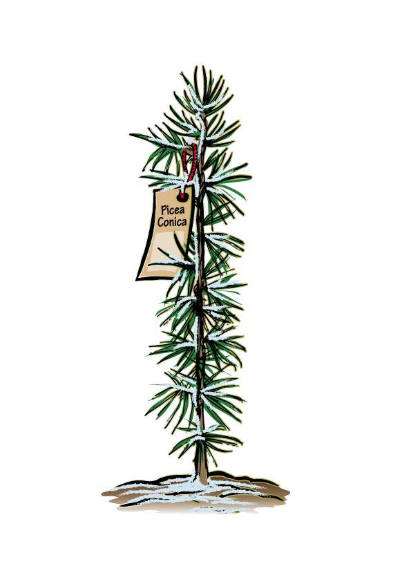 Kerstboom stekje