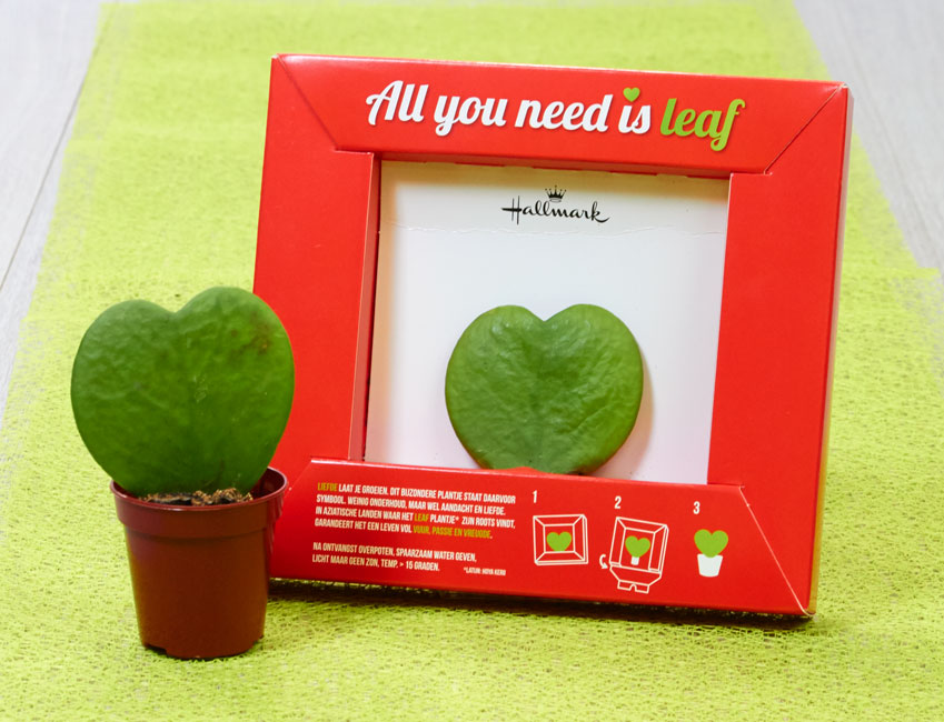 All You Need is Leaf