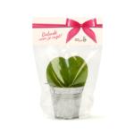 Leafplantje voor de zorg
