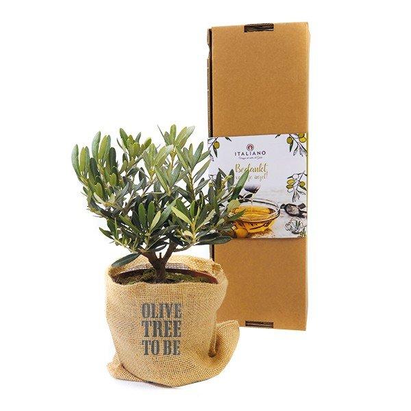 Olijfboom in persoonlijke verpakking