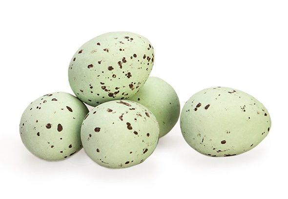 kievitseitjes-groen